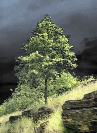 Lone-Tree-5.jpg